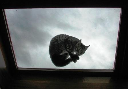 Auch Katzen wollen wissen, wie es in der RIA ausschaut!